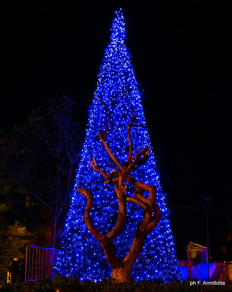 L 39 albero di natale di manfredonia - Immagine di regali di natale ...