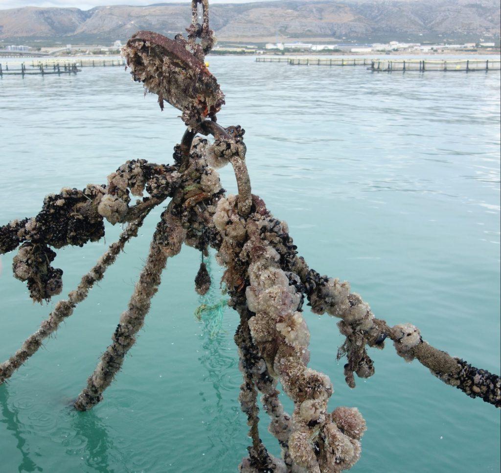 Allevamento di spugne nel Golfo di Manfredonia. L'acquacoltura integrata nell'economia circolare - Manfredonia News